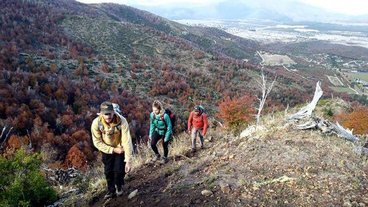Ardua y silenciosa tarea de reforestar bosques quemados