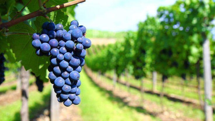 Argentina tierra de vinos blancos