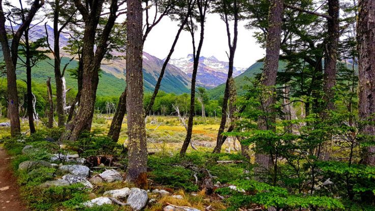 Debemos convivir y no competir con el bosque