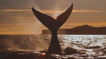 Dos nuevos parques nacionales marinos