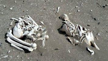 Hallan restos humanos de 3.000 anos