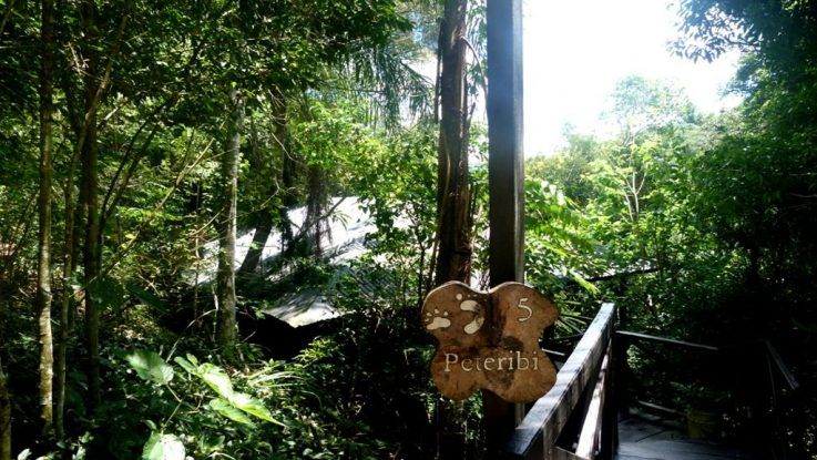 La Selva Misionera como una de las maravillas naturales
