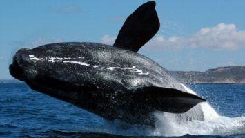 Patagonia Argentina para avistar ballenas