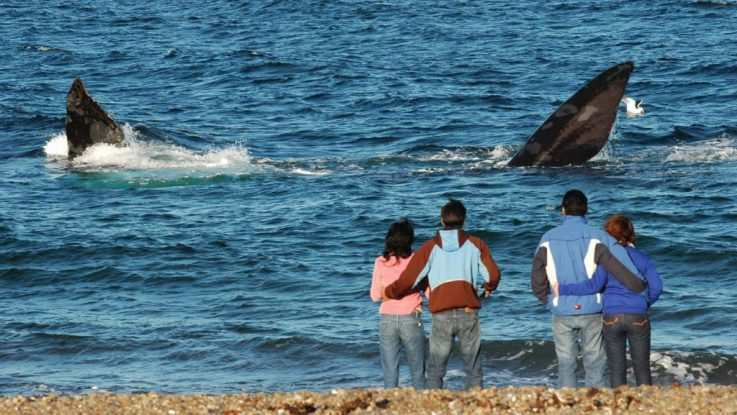 ballenas francas