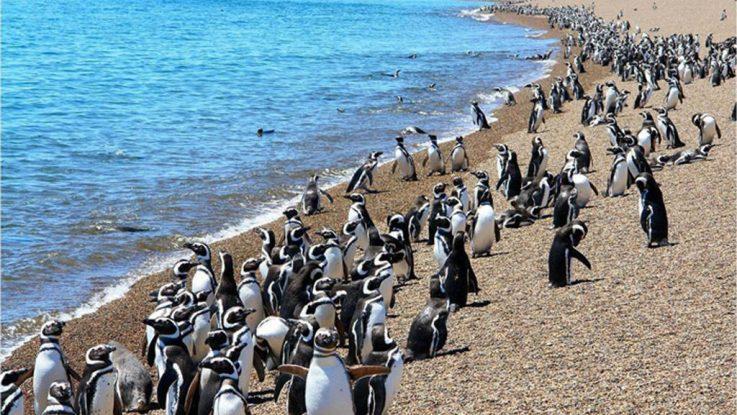 pinguinos en punta tombo